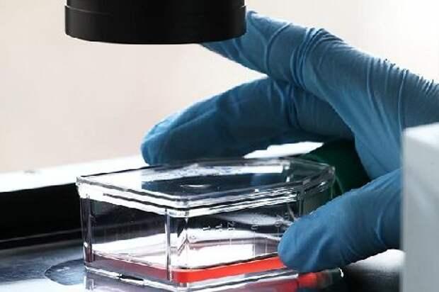 В Роспотребнадзоре сообщили о формировании новых штаммов коронавируса