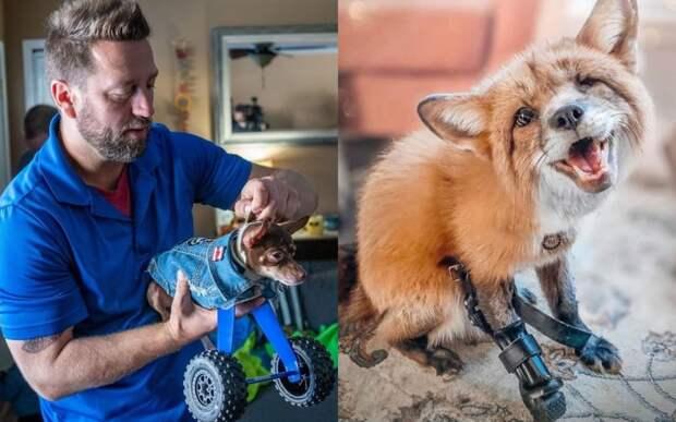 Мужчина возвращает животным возможность ходить, делая уникальные протезы