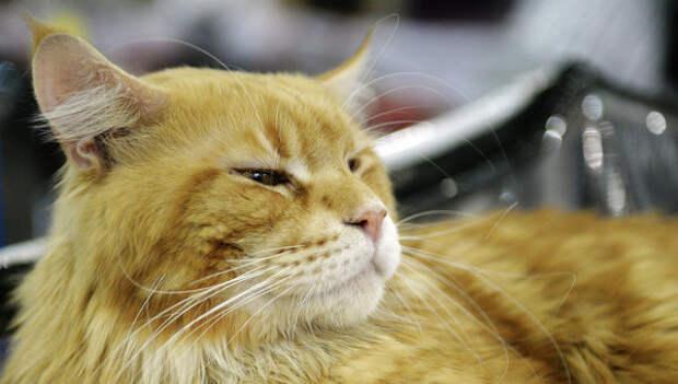 СМИ: кот объел мясокомбинат в Харькове почти на 26 тысяч рублей