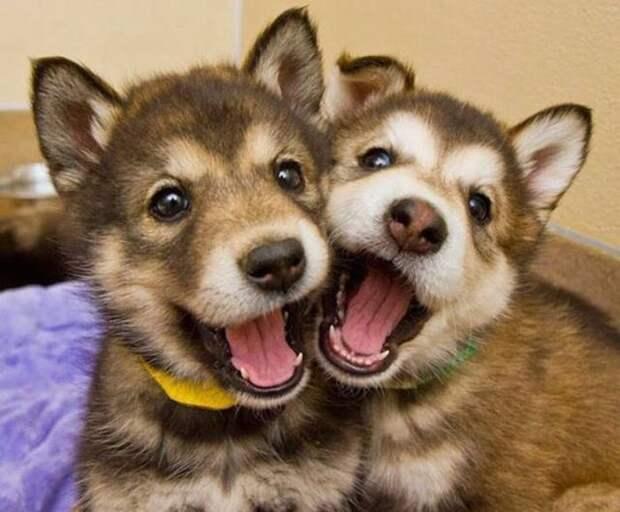 Подборка забавных надписей к картинкам и веселых фотографий из сети для хорошего настроения