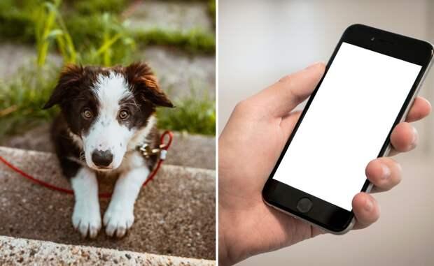 Девушка разрешила сделать фото пса и пожалела, узнав, что попало на снимок