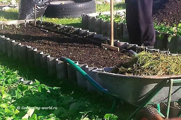 После вкапывания сидерата выравниваю почву и делаю бороздки.