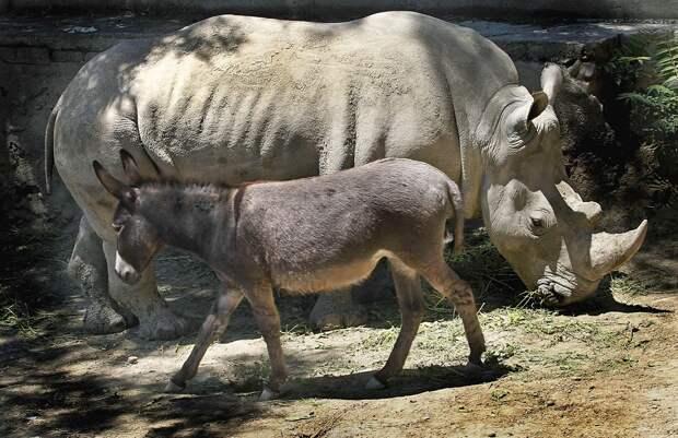 zhivotzaiyun 3 Лучшие фотографии животных со всего мира за неделю