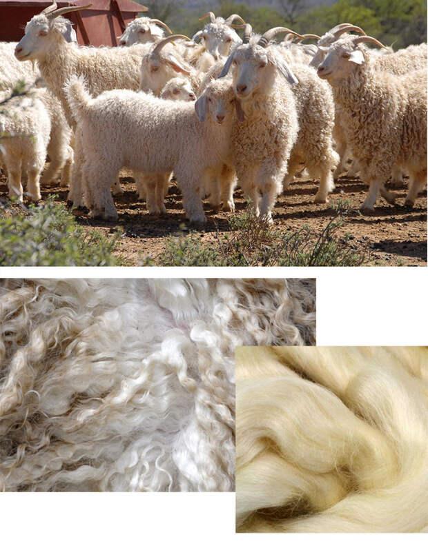 овечья шерсть