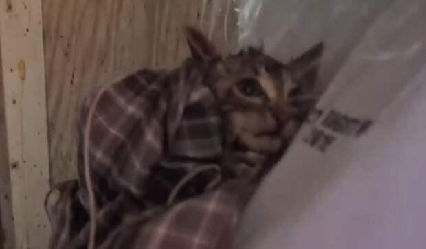 Спасение котенка, застрявшего на 5 дней в узкой трубе