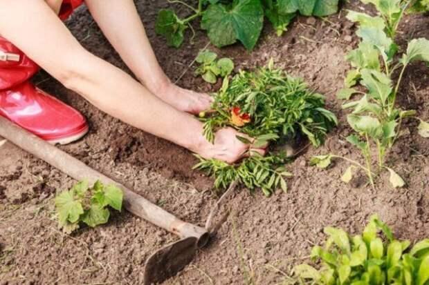 Какие многолетники нужно делить и пересаживать весной