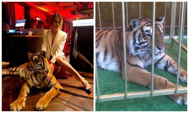Защитники прав животных атаковали светских львиц за тусовки с хищниками
