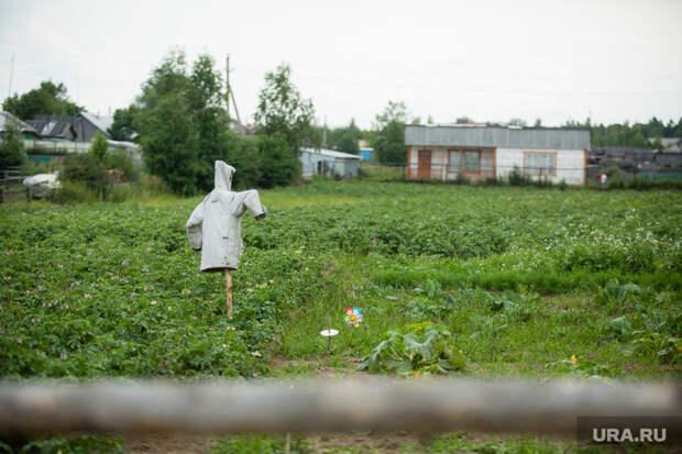 Самарский министр посоветовала семьям, живущим на пособие, завести огород. «Считаете, что государство должно всех содержать?»