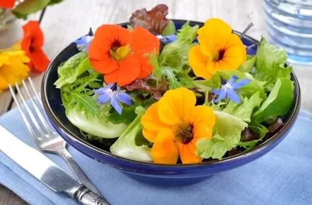 Цветочное меню: рецепты кулинарных шедевров из цветов