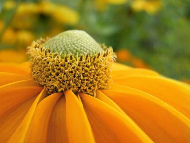 Цветок необыкновенно яркий и привлекает внимание