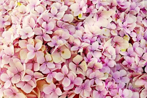 На Есенинском бульваре появились новые яркие цветники