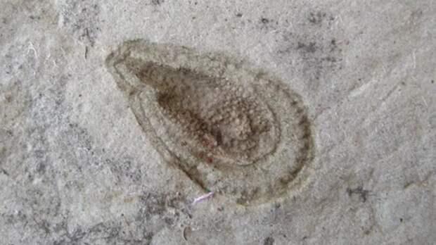 Ученые обнаружили древнейшее существо на Земле
