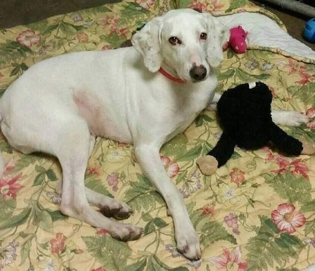 Этот милый пес 11 раз возвращался в приют, и волонтеры поняли, что не смогут с ним попрощаться