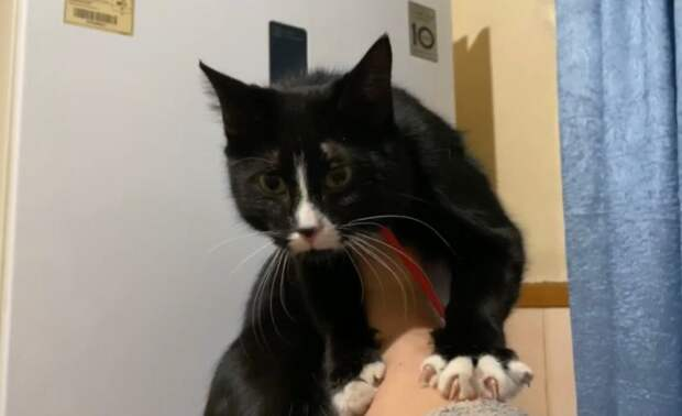 Бездомная кошка Китти выживала в подвале, из которого никак не могла выбраться