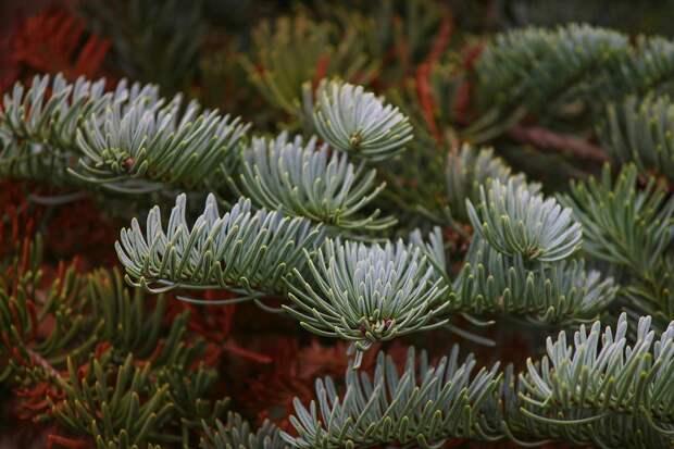 Пункт приема елок откроется после новогодних праздников на 9-й Северной линии
