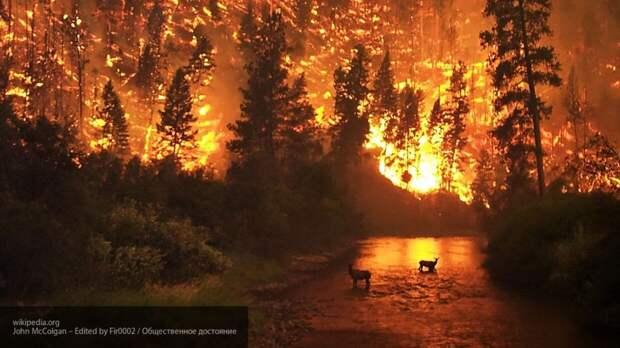 Американские СМИ сообщили о 23 смертях в результате пожаров на западе США