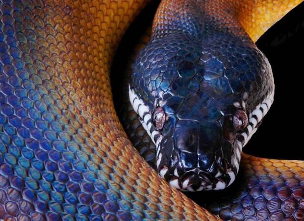 ✨  8 офигенных фото голографической змеи