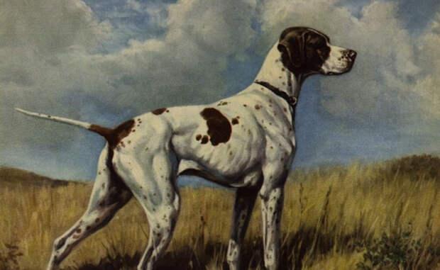 Породы собак, которые изчезли