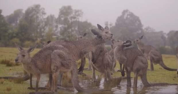 Австралия продолжает прибывать не в лучшем состоянии. Недавно выпавшийдождькое-где превратился в потоп, с неба рухнул мощный град, да и пожары ещё не отступили.