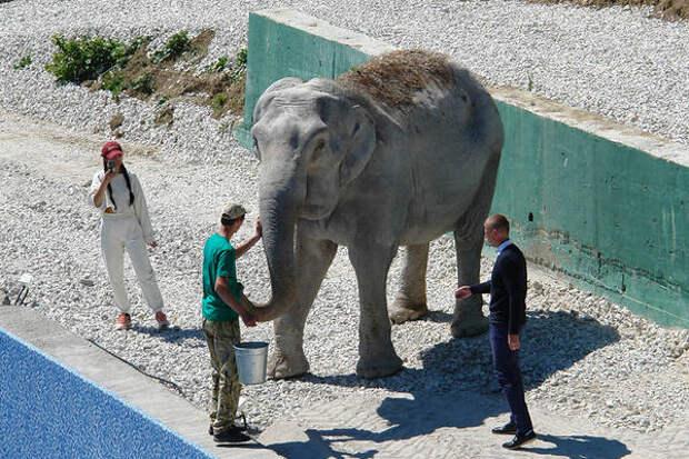 Росгосцирк договорился о «пенсии» для цирковых животных в Крыму