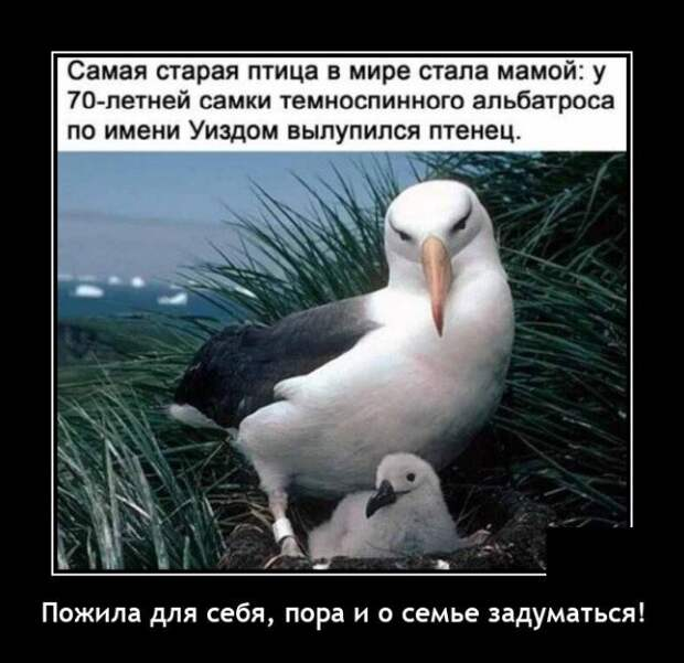 Демотиватор про птицу