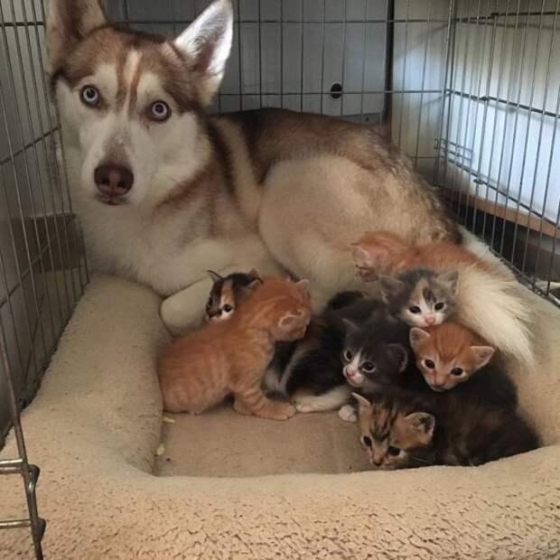 Дюжина примеров, что собаки на самом деле — четвероногие комики!
