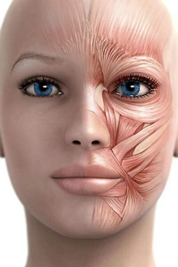 Подтягиваем лицо! Упражнения-невидимики, которые можно делать в любое время в любом месте