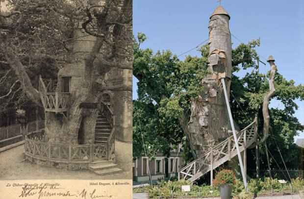 Алувильский исполин: дуб-часовня