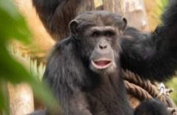 В зоопарках Чехии для обезьян установили Zoom
