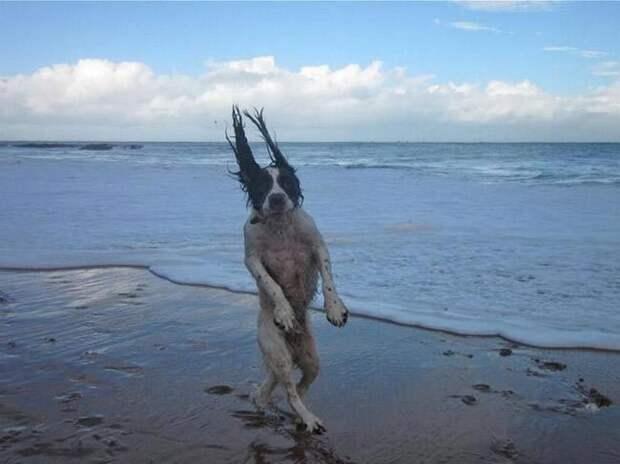 смешные собаки, безумные собаки, действия собак невозможно объяснить