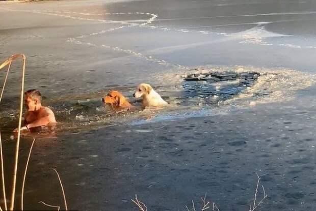 США покорил сибиряк, спасший двух собак из «ледяной ловушки» в Нью-Йорке...