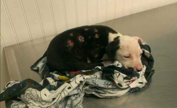 Невероятная история щенка, который выжил в пожаре