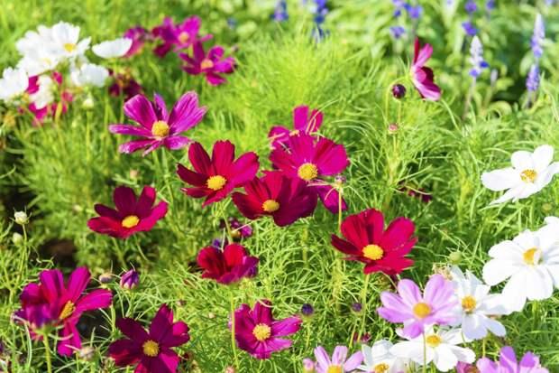 10 декоративных растений для бедной почвы