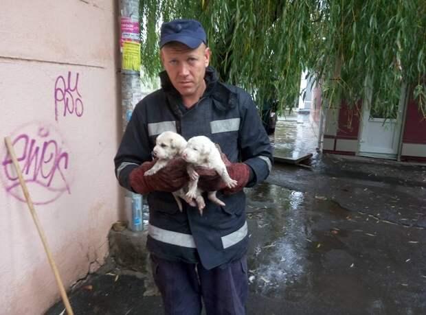 2 белых щенка тонули под тротуарной плитой! К счастью, МЧС-совцев Черноморска не надо было просить дважды…