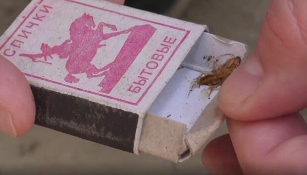 Борцов с насекомыми заподозрили в разведении тараканов в многоквартирных домах Ижевска