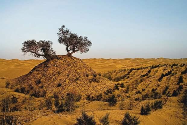 Пейзаж пустыни Такла-Макан