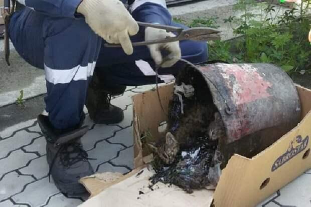 Ветеринары и волонтеры не смогли достать котят и позвали спасателей. Фото: new.dvrpso.ru