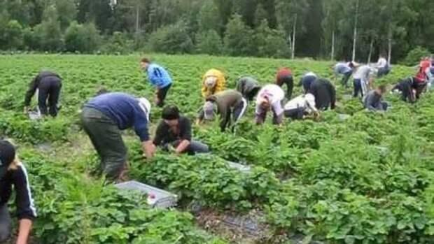 """""""Райская"""" работа заробитчан в Финляндии показала глубину кризиса на Украине"""