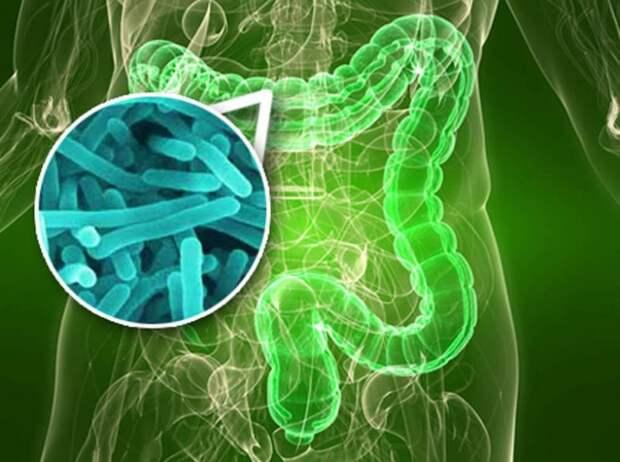 Как оздоровить свой микробиом