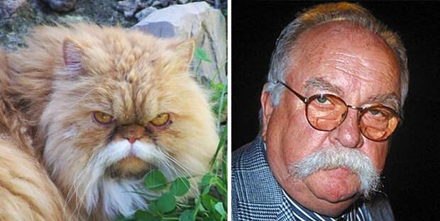 Кот-двойник