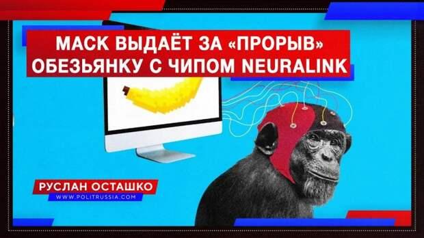 Маск выдаёт за «прорыв» обезьянку с чипом Neuralink
