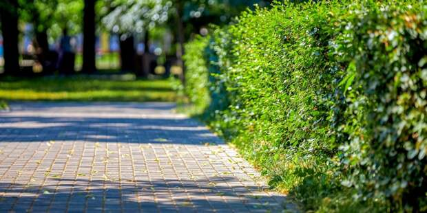 Сад ветеранов в ВАО благоустроят к 15 августа