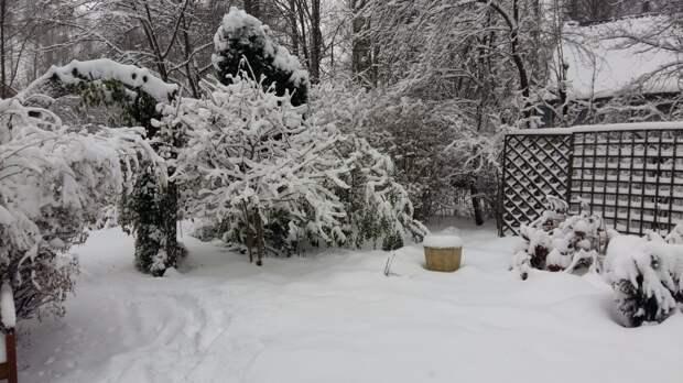 Список дел на январь. Памятка садоводам и огородникам.