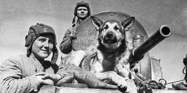 Знаменитые четвероногие бойцы Дины Волкац