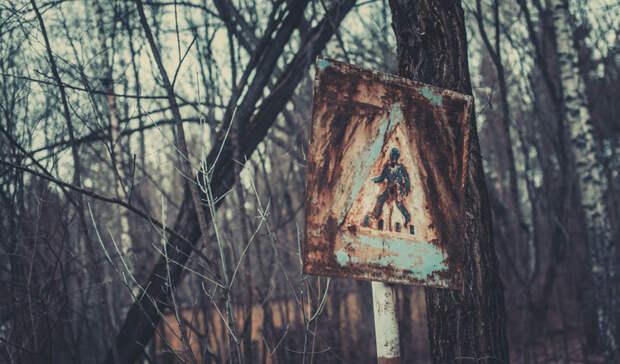 Огурцы из Чернобыля: что растет в зоне отчуждения