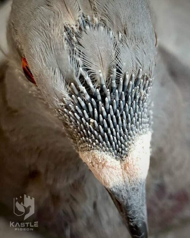 17. Фото перьев голубя с приближением
