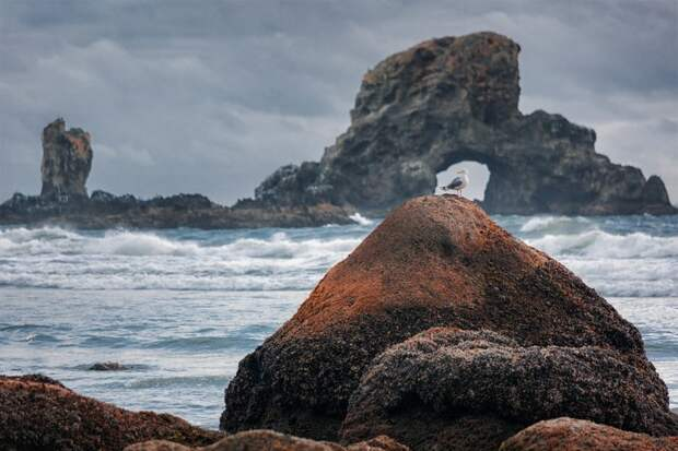Волшебный Тихоокеанский Северо-Запад в объективе Лукаса Фурлана
