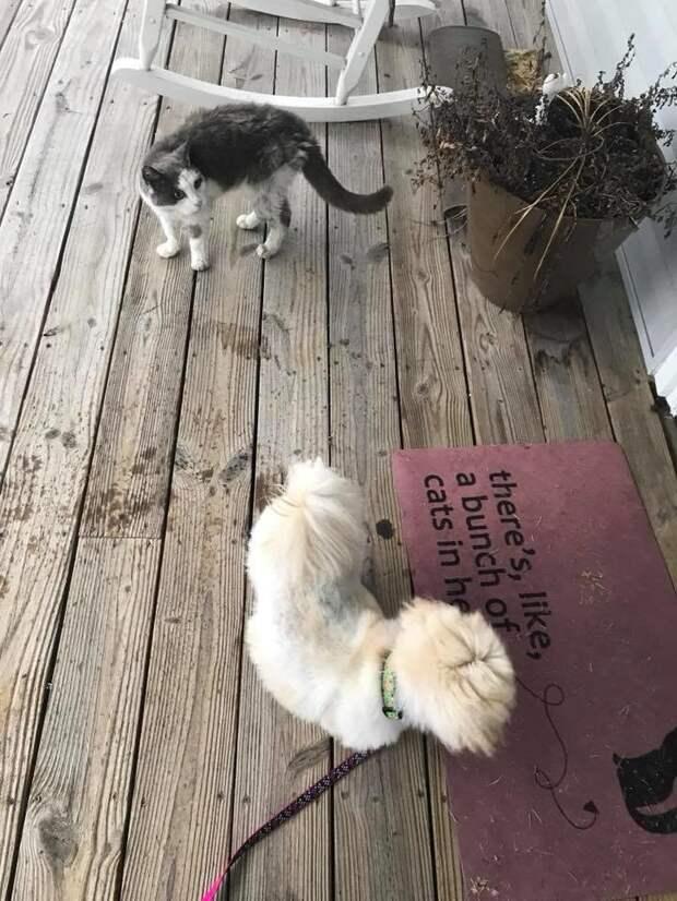 Больная бездомная кошка сама пришла в дом, показывая, что ей нужна помощь