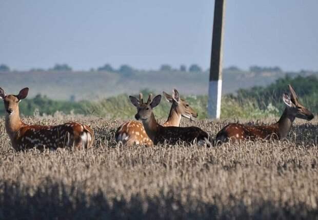 На Кубани оштрафовали более 1200 охотников