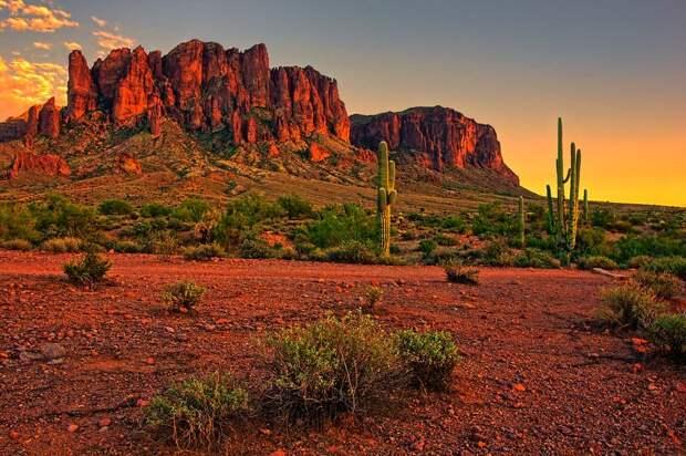 Картинки по запросу пустыня сонора